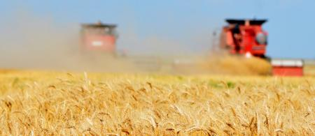 Wheat harvest in the Texas Panhandle