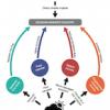 indirect impact pathways